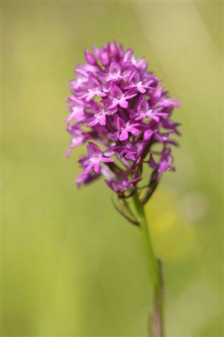 Die Orchideenartenvielfalt in Biberstein ist einzigartig.